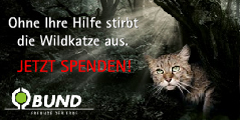 BUND: Rettung für die Wildkatze
